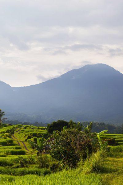 Natural Rice Terrace Trekking
